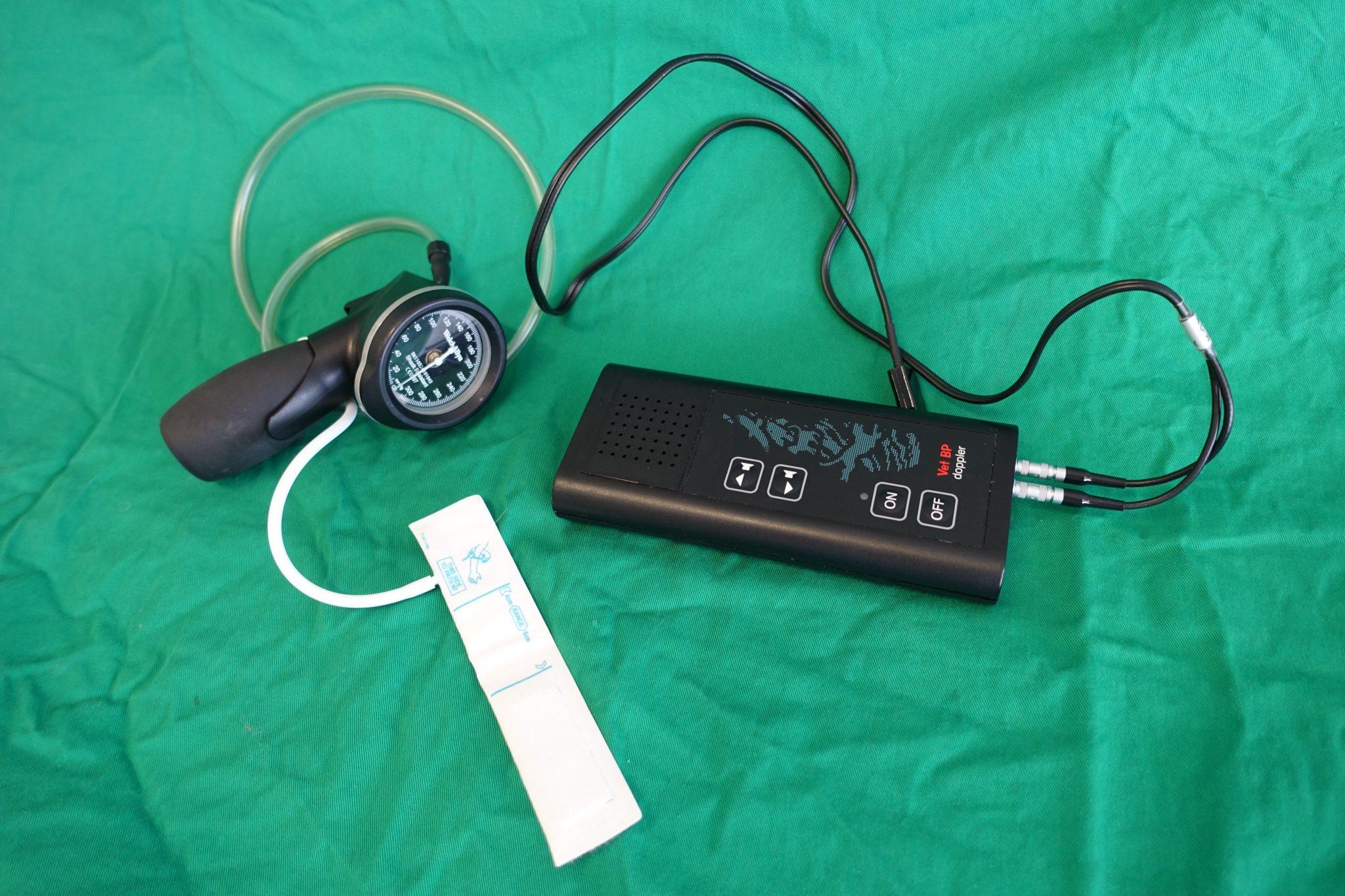 Ipertensione felina - Centro Veterinario Airone
